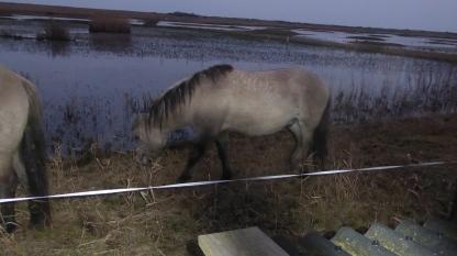 Konick Pony