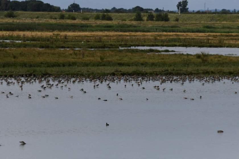 Frampton Marshes